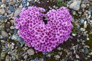 amour fleur coeur harmonie beauté rose