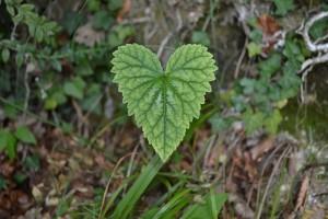 trek salam montagne - feuille - fleurs - coeur