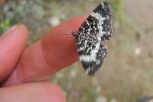 papillon doigt Beauté